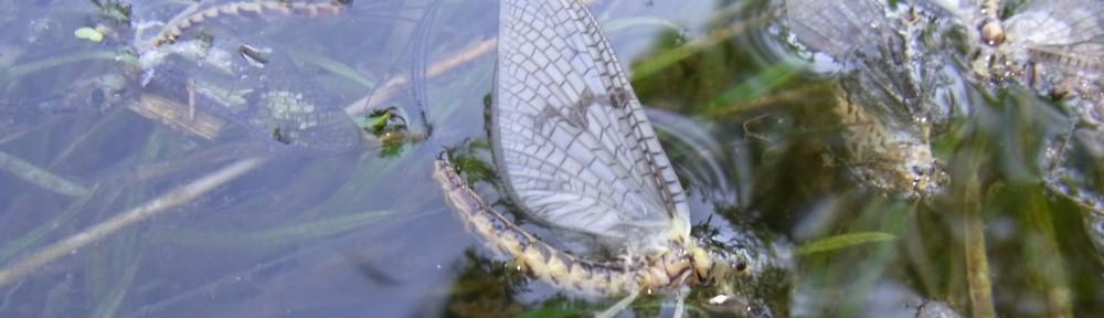Fly Fishing Paradise