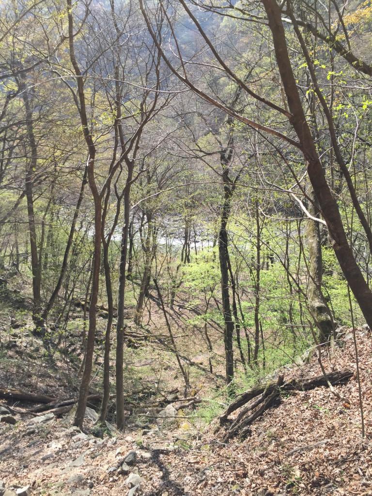 まだ若葉がチラホラ。美しく萌える森までもう少し…