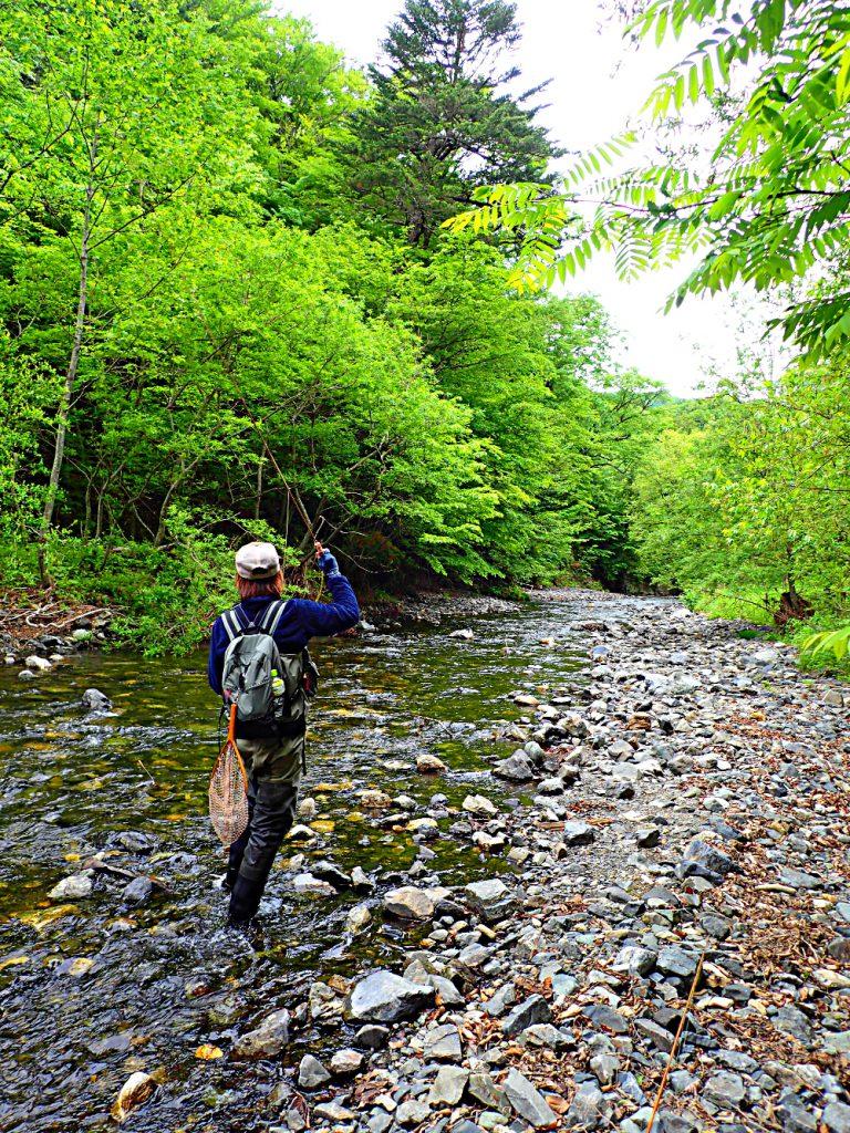 先週は、釣れて釣れて仕方がなかったという、と或る渓流にて。本日はリーダーへと進化したSugar君と。