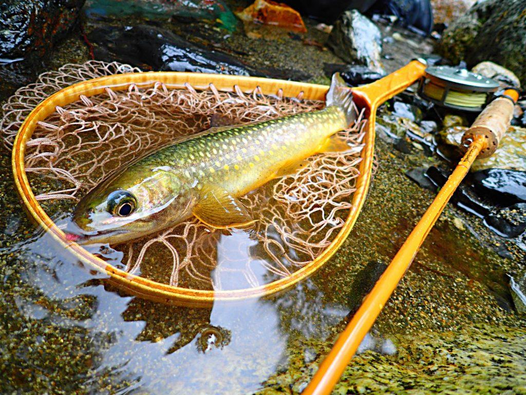 Sugar君の釣った9寸の岩魚。肉厚で筋肉質のタフな魚である。当然ながら引きも強烈。