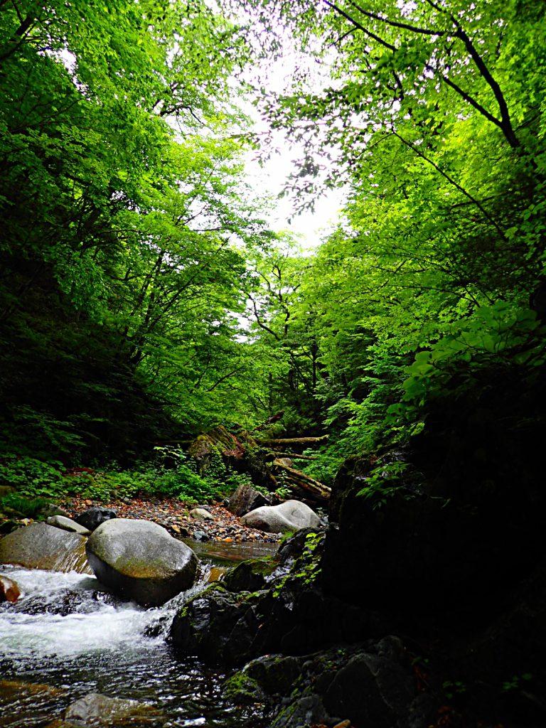 深い森の緑に抱かれ、今日も風の歌にしみじみと…