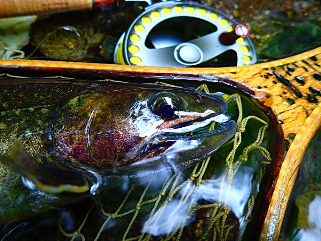 心の闇から這いずり出てきた魚。そっとリリースすると、ゆっくりと虚空の彼方へ戻っていった。